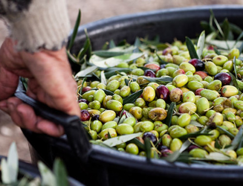 Why Olive Oil May Not Be the Best Cooking Oil